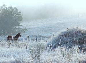 häst i vinter